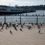 Circle Line Sightseeing Cruise