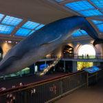 New York - Ingresso del Museo di Storia Naturale (esposizione pesci)