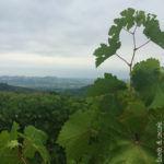 Passeggiata tra le vigne